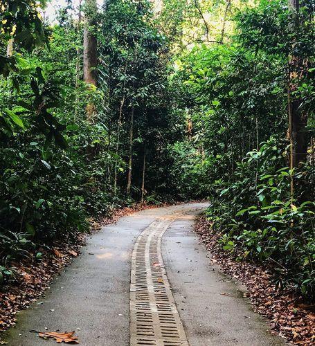 bukit trail